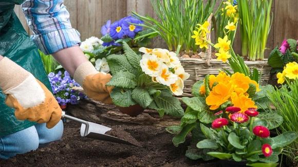 цветы сад дача интернет магазин