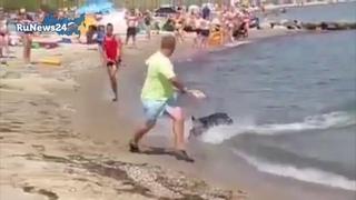 Дикий кабан выплыл из моря и атаковал отдыхающих в Германии / RuNews24