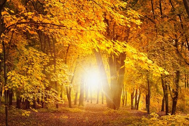 Лесной вернисаж