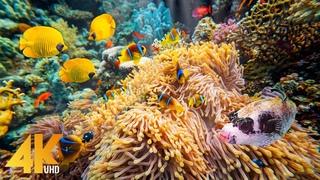 7 часов Удивительный подводный мир Красного моря - Расслабляющее видео 4K с успокаивающей музыкой - Часть №5