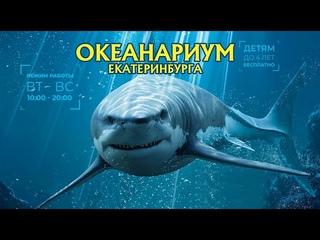 Океанариум Екатеринбурга 2020