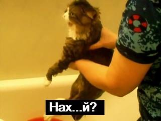 Кот матюкается · #coub, #коуб