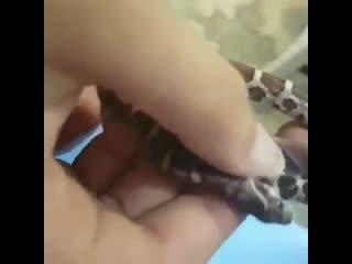 Такое зрелище часто бывает в мире дикой природы. Так как змеи зачастую путают свой хвост с добычей.
