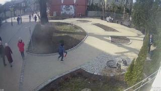 Домашнего кота выбросили на улице в Зеленоградске