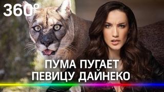 Дайнеко: «Я не должна реветь от страха». Пума на улицах Москвы пугает певицу и её соседей