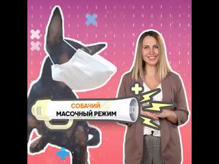 Собачий масочный режим