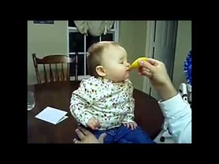 Baby Taste Lemons For The First Time )
