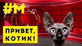 #МОНТЯН: Про Донбасс, Зеленского и… Крымский мост 😸