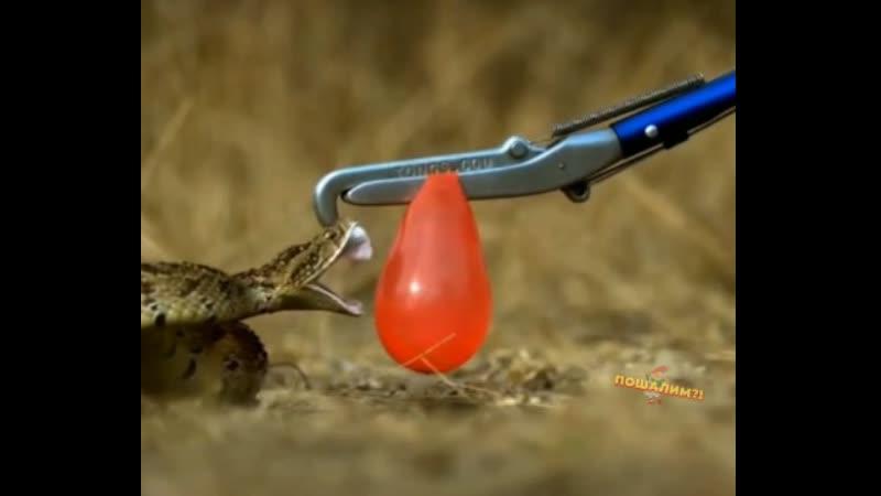 Змеиный кусь