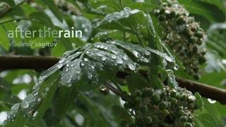 After the rain - Turkish Russian Saz Baglama :)