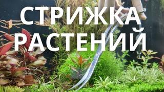 Стрижка аквариумных растений