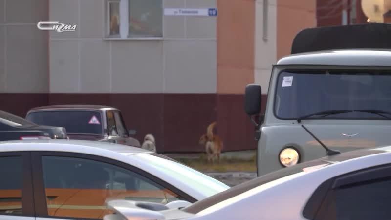 В Новом Уренгое отловщики ловят собак в подвалах домов
