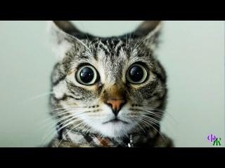 «Тупая ты, Ира. С кукухой совсем не дружишь» - Хозяйка и кошка с недоумением взглянули друг на друга