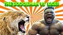 THE BOOGIEMAN VS A 800LBS LIGER