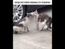 Прикольное видео про кошек.Когда все равно любишь эту психичку