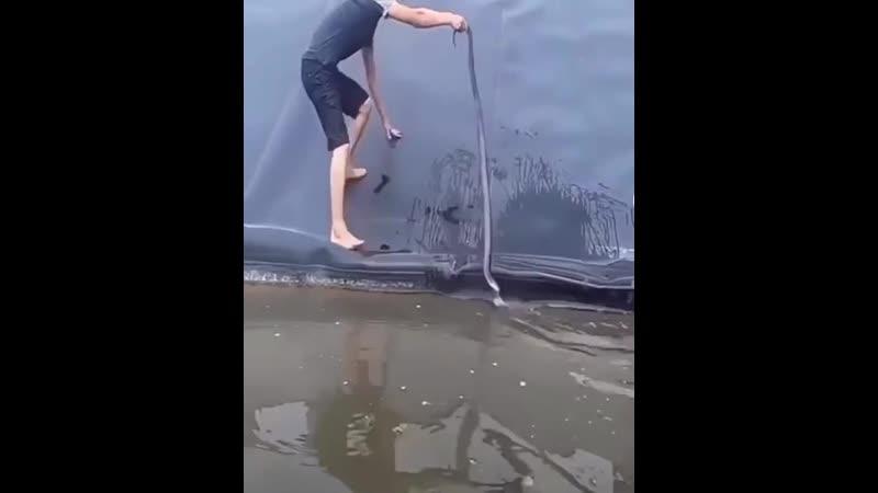Отважный спасатель вытаскивая змею из водоёма вынужден был спасаться от питона видео