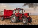 Kukorica aratás MTZ 82 Turbo Schwarzmüller 2x MBP Claas Mega 204