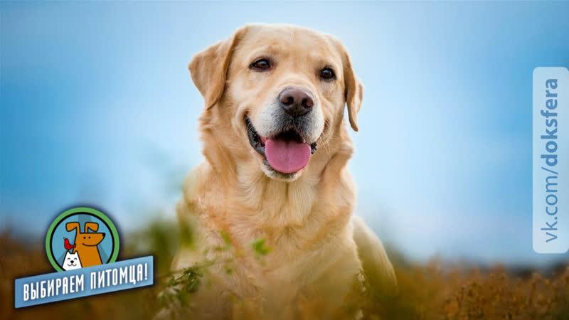Большие собаки для города Выбираем питомца