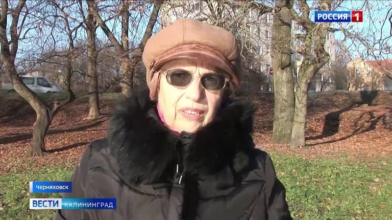 Жители Черняховска бьют тревогу из за проделок бобра на берегу замкового пруда