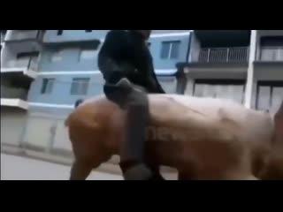Вперёд мой верный конь! dgth`l vjq dthysq rjym!