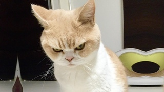 Funny Angry Cats 🤣 Watch Until The End! Don't Mess With These Pets
