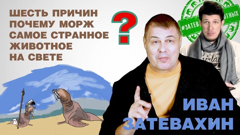 07 Шесть причин почему морж самое странное животное на свете Затевахин о Животных