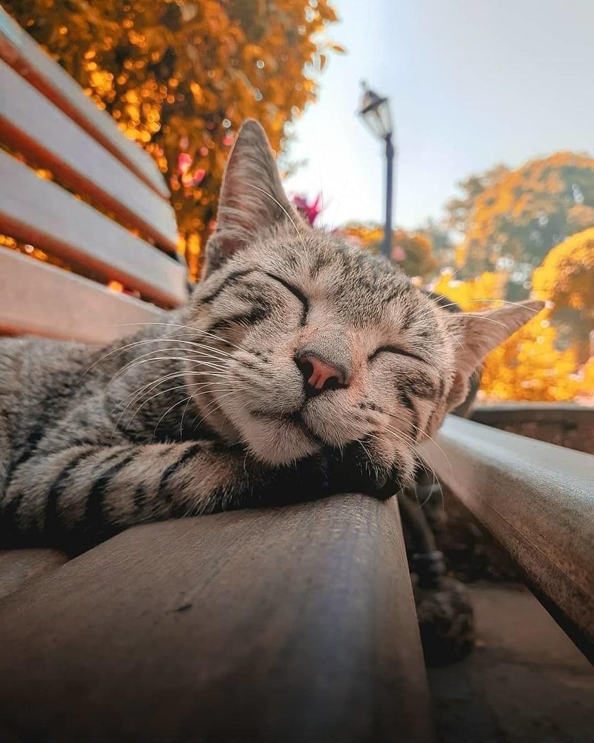 """Притомился. Фонарь тоже утомлён))) Сон кота :""""Пахнет..."""
