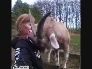 Дружба животных и людей ❤️😍😊
