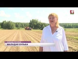 Бульба белорусских фермеров  [БЕЛАРУСЬ 4| Могилев]