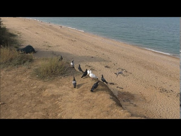 пляж Любимовка духота 27 с утра