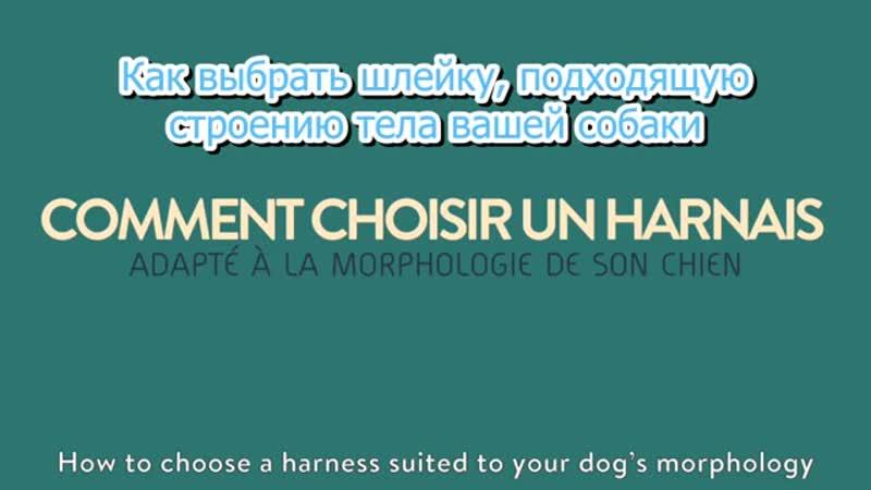 Как выбрать ШЛЕЙКУ для собак....