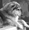 Волонтеры приюта для собак Академгородка