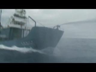 Whale Wars Китовые Войны HD