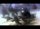 Shark Feeding with Stewart Cove in the Bahamas (Canon HF200 WP-V1) Scuba Diving
