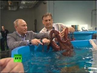 Путин посетил океанариум на острове Русский, где пообщался с осьминогом. С крабом Путин не общался.