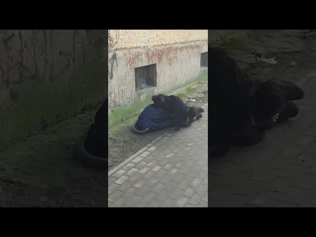 Калининград ♡Балтрайон♡ Построй свою любовь