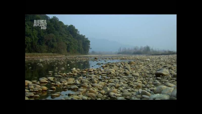 В дебрях Индии. Ганг река жизни