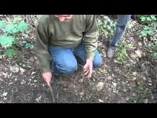 Тернопіль 20 хвилин: гора Богит - капище