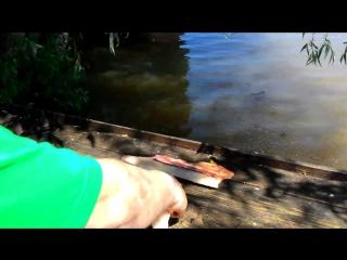 Филейный нож из булата, разделка щуки на филе