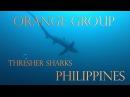 ORANGE GROUP - Philippines, Malapascua,Tresher Shark
