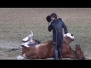 Funniest Horse Act Ever! Tommie Turvey and Pokerjoe! - Night of the Horse 2015 - DMNHS
