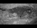 Пара филинов ест египеткую летучую собаку (Rousettus aegyptiacus)