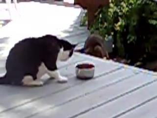 Енот и жадный  Кот