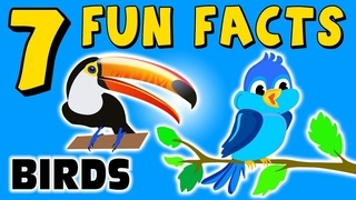7 FUN FACTS ABOUT BIRDS! BIRD FACTS FOR KIDS! Parrot! Toucan! Learning Colors! Funny! Sock Puppet!