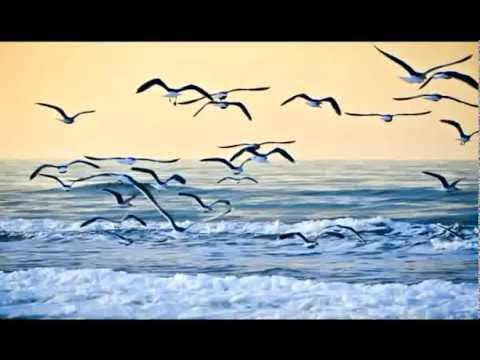 Не вейтеся чайки над морем