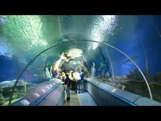 """""""Подводный"""" тоннель-аквариум в петербургском Океанариуме"""