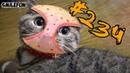 КОШКИ 2019 Смешные Коты 2019 приколы про котов с котами ДО СЛЁЗ Funny Cats