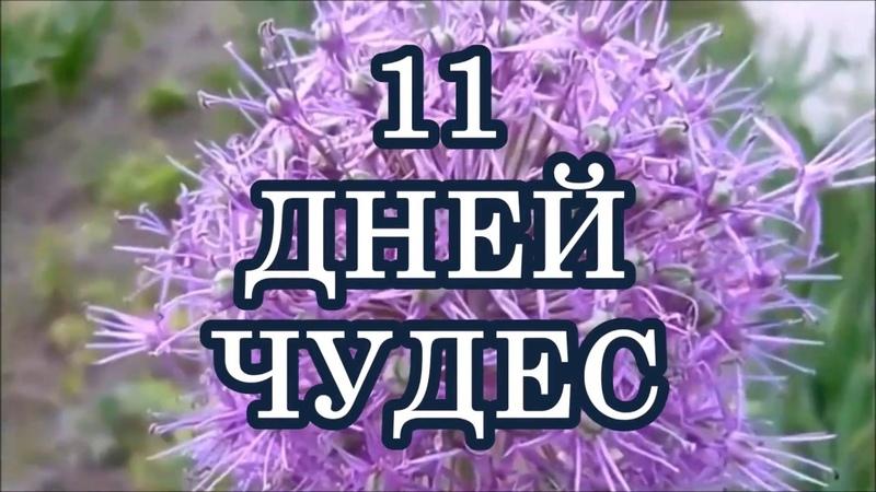 АНГЕЛОТЕРАПИЯ 11 ДНЕЙ ЧУДЕС ОТ АРХАНГЕЛА МИХАИЛА