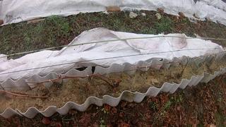 Укрытие винограда на зиму.Новый способ!!!