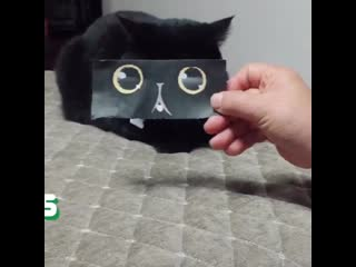 Black cats are best cats